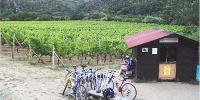 Ochutnávkový stánek vinařství Znovím Šatov přímo na vinici Šobes v NP